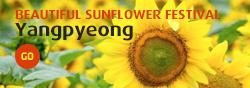 Beautiful Sunflower Festival_Yangpyeong